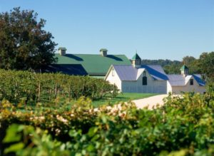 Maryland wine vineyards boordy